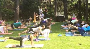 Yoga @ Swissotel Sultan Park