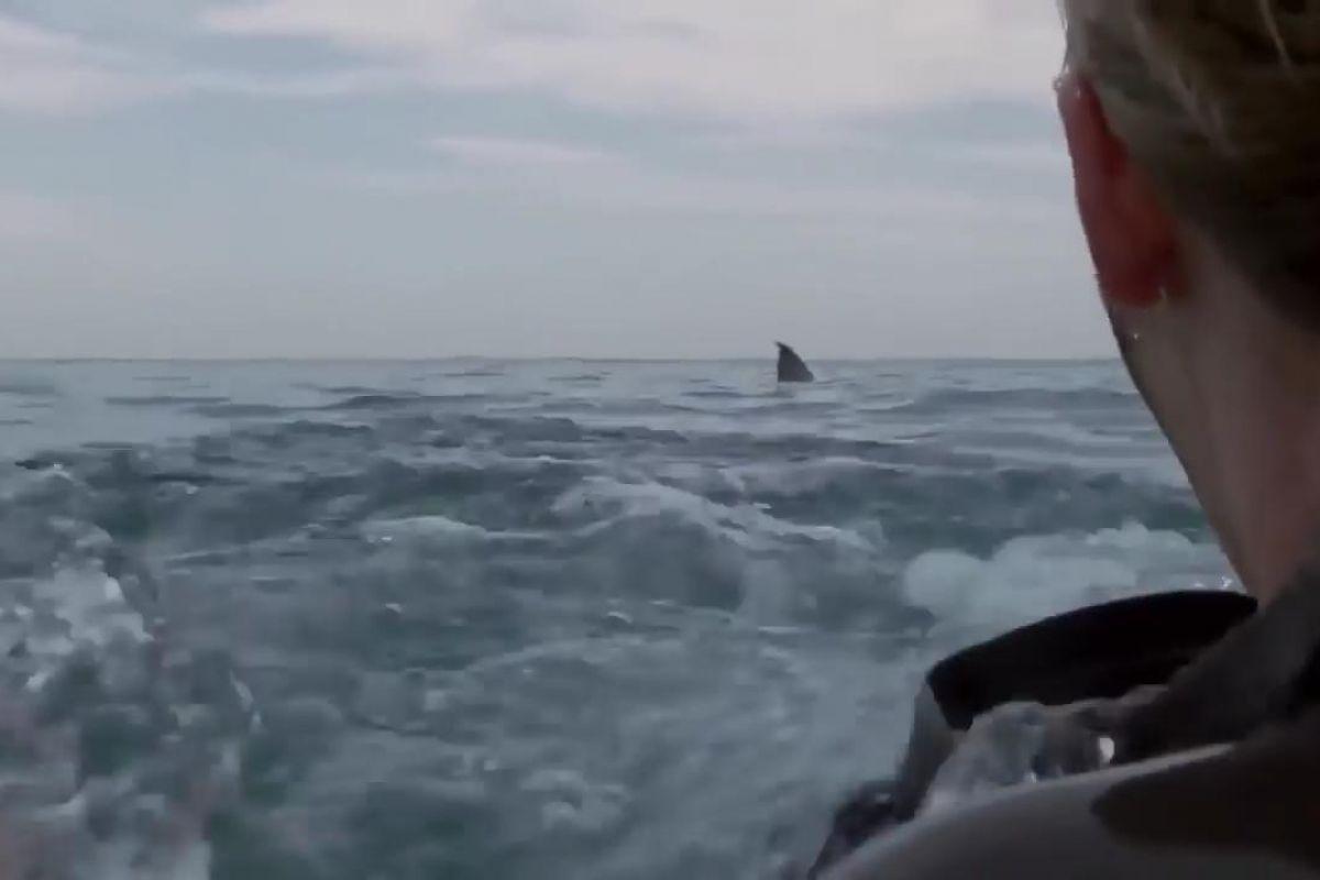 Açık Deniz 3: Kafes Dalışı