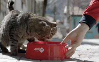 Aras Kargo'dan Sokak Hayvanları İçin Su Kabı Seferberliği