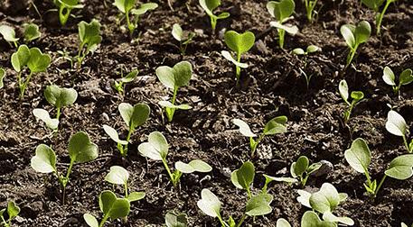 5-7 Yaş Bitki Atölyesi - Minik Tarl