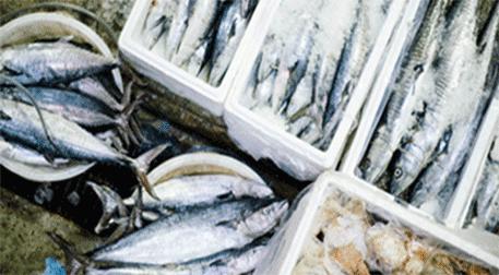 Balık Pazarı II