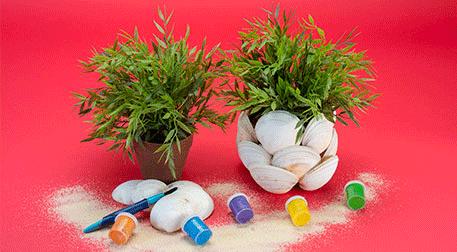 Kumdaki Hazine: Deniz Kabukları