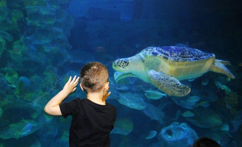 Avrupa'nın En Büyük Yeşil Deniz Kaplumbağası Iggy