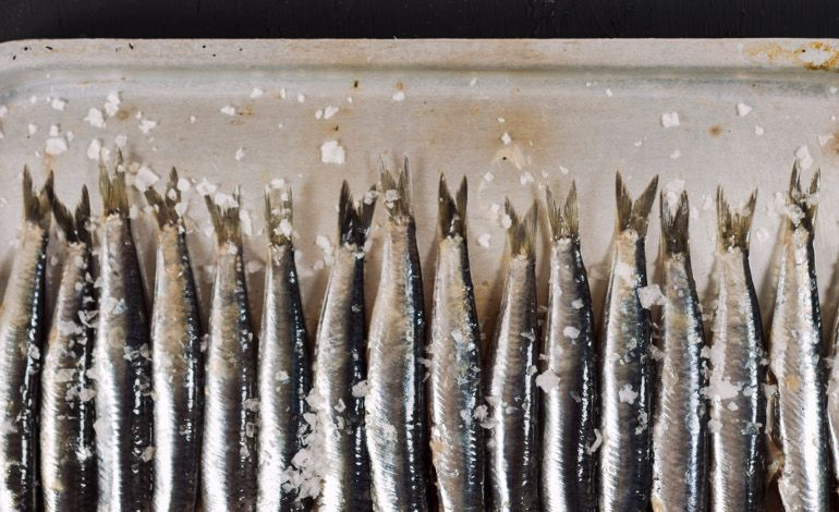 Mevsimin En Taze Balıkları Lacivert'te!