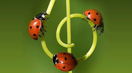 Kozmozlu Dostlar Orkestrası Sonbaha