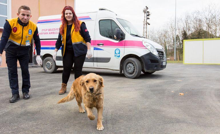 Sokak Hayvanlarına Özel Klinik ve Ambulans