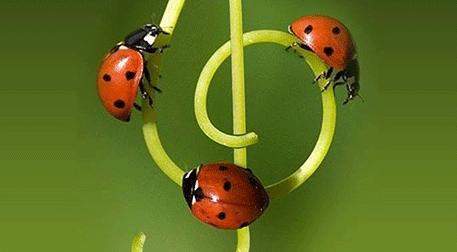 Kozmozlu Dostlar OrkestrasıKonseri