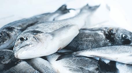 Mevsimin En Lezzetli Balıkları USLA