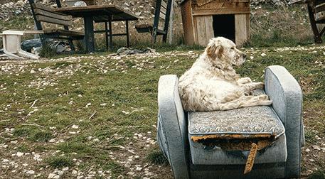 Köpek Filmi