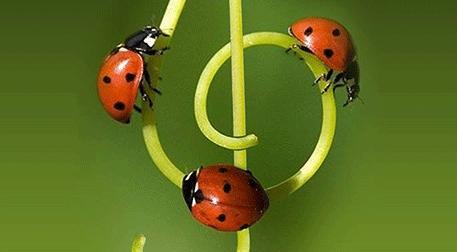 Kozmozlu Dostlar Orkestrası Bahar K