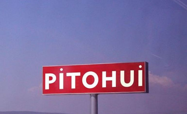 Pitohui