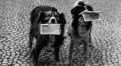 Sanatatak Sunar: Animal Charm