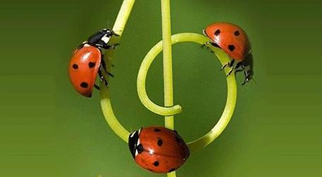 Kozmozlu Dostlar Orkestrası