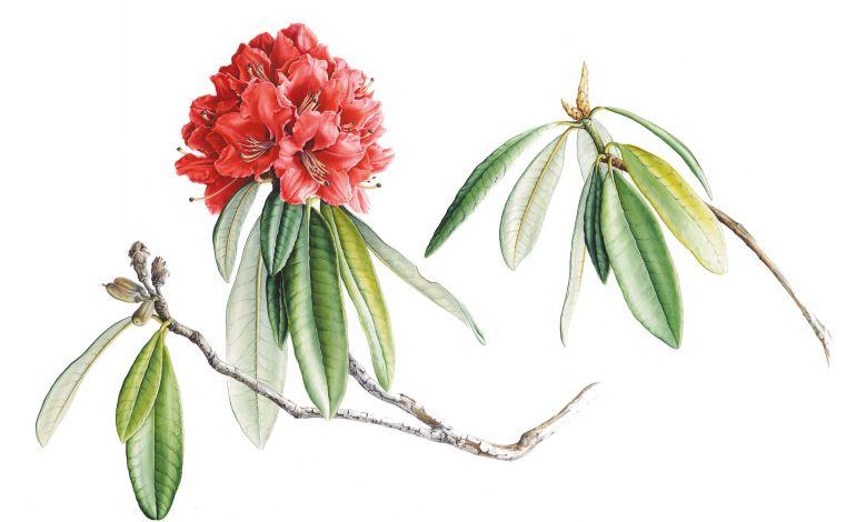 Bir Bitki Ressamının Hikâyesi