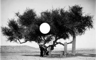 Basma Alsharif - Orada Her Kimse