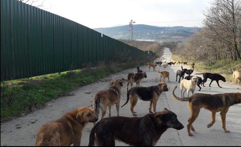 Şiddet ile İhtimam Arasında: İstanbul'un Köpekleri