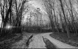 Kezban Arca Batıbeki - Yolda II
