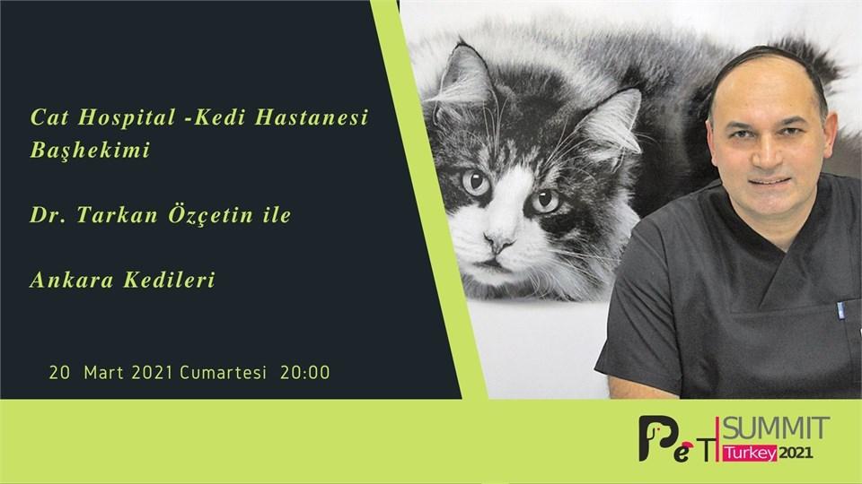 Doğal Bir Sembol ''Ankara Kedileri''