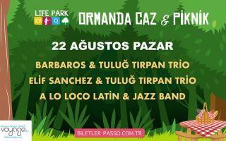 Ormanda Caz & Piknik - 22 Ağustos