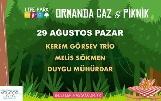 Ormanda Caz & Piknik - 29 Ağustos