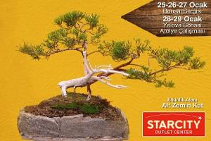 Minyatür Ağaçlar Bonsai Sergisi