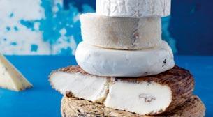 MSA - Artisan Peynir Yapımı